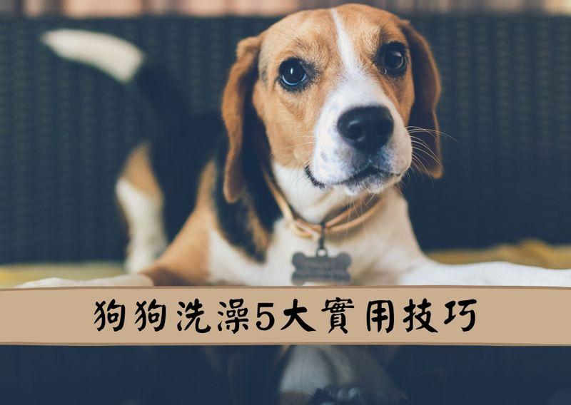 狗狗洗澡五大實用技巧