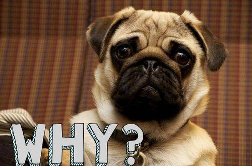 狗狗常見問題
