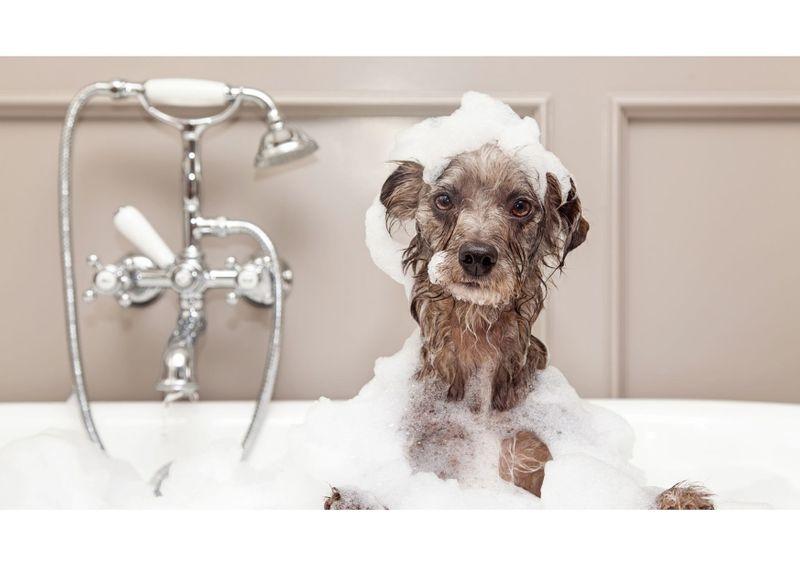 狗狗洗毛精