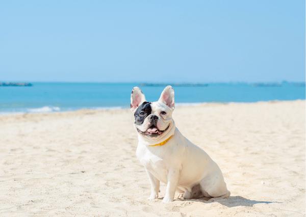 【台東寵物住宿】TOP11寵物友善住宿推薦!villa、海景、草地,任你挑!