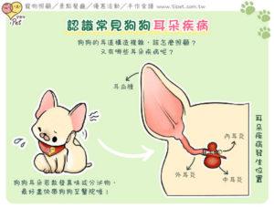狗狗耳朵構造